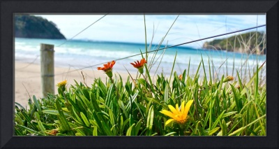 New Zealand Beach Flowers