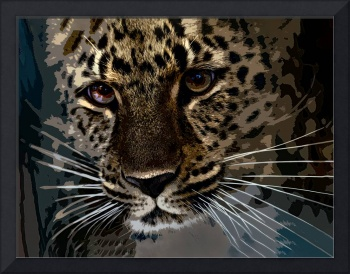 Stunning Leopard Up Close and Personal