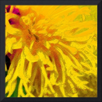 Yellow Dahlia Abstract