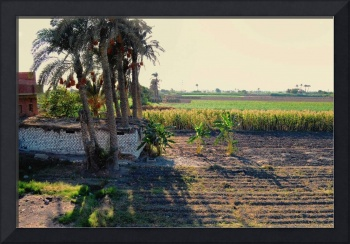 Countryside in Egypt