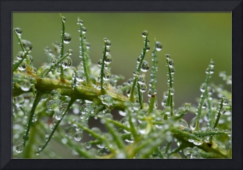 Raindrops on Green