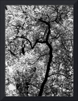 Abstract Tree Branch