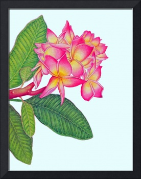 Frangipani Watercolour