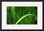 Dragonfly by Mark Cullen