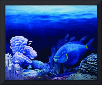 'Lighthouse Reef'  Tropical Reef Fish and Coral