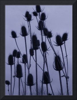 feng shui: blue thistles empty sky