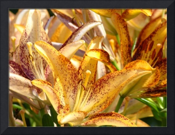 OFFICE ART Golden Glowing Lilies Lily Flowers