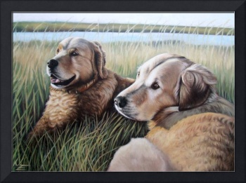 Two Golden Retriever