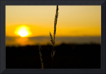 Blade of grass against sunset