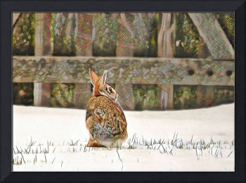 Mosaic Cottontail in Snow