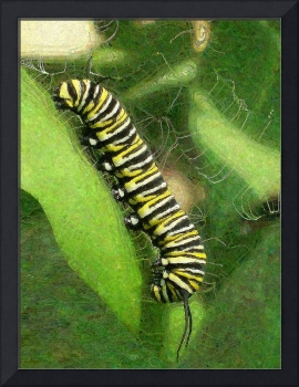 Monarch Caterpillar - Sunset Relaxing