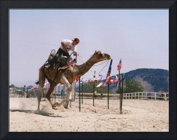 Virginia City Camel Races 1