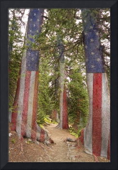 American_Rocky_Mountain_Forest_Trail_Walk