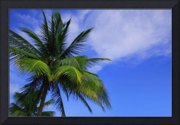 Palm Tree Against Perfect Sky