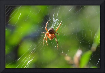 Red On A Web