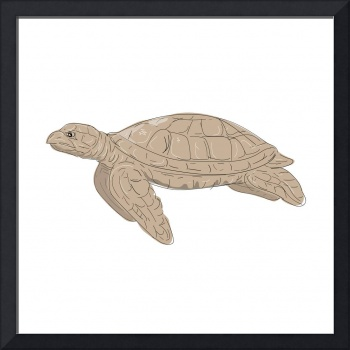 Hawksbill Sea Turtle Side Drawing