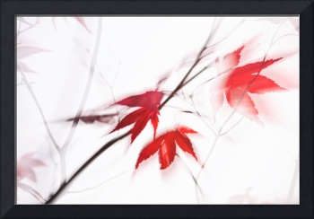 Red Maple Leaves Abstract 1