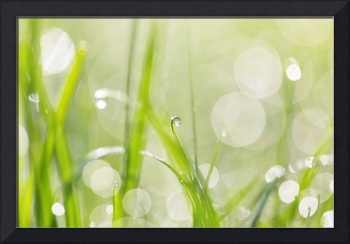 Dewdrops in Sunlit Grass 2