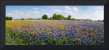 Wild About Round Rock Wildflowers Panorama