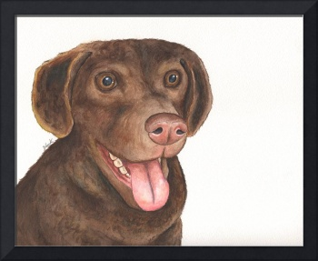 Chesapeake Bay Retriever Bailey