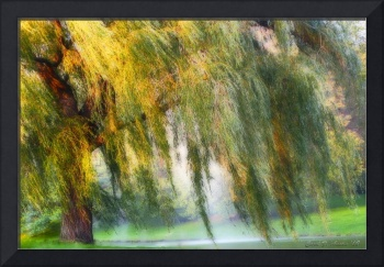 Misty Weeping Willow Tree