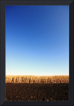 Blue Sky & Fall Corn: Lee, Illinois Farm
