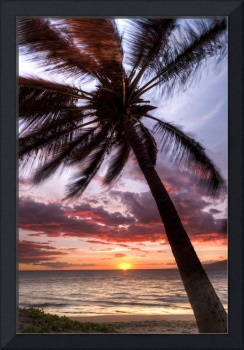 Maui Hawaii Coconut Palm Tree Sunset