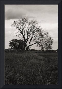 Black and White Photograph of Wilting Tree
