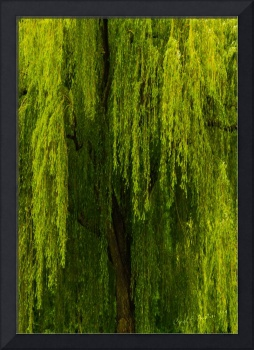 Weeping Willow Tree Landscape Meditation Wall Art