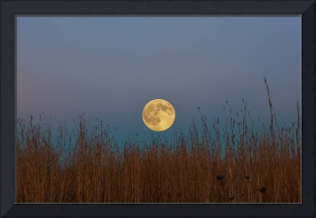Hunters Moon 3 by Jim Crotty
