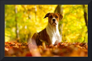 Hunting Dog In The Autumn Leaves