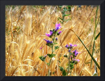 Wild Wheat and Wildflowers