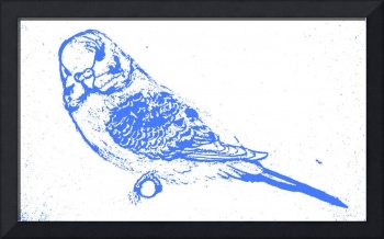 Blue Budgie Portrait
