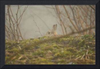 Rabbit in the fog