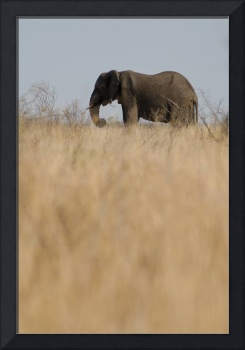 african Elephant-South Africa-SAA8992