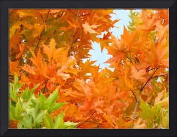 Orange Green Autumn Leaves Art Prints Nature