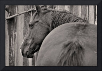 Black Mare by the Barn, Horse Art