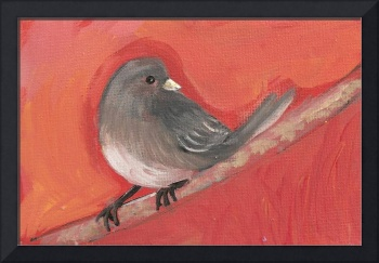 Junco Bright
