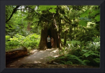 Two Under Tree, Cathedral Grove, 1993