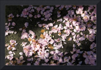 Scattered Camellia Petals Touched by Sun