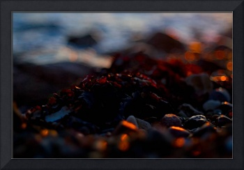 Red Seaweed by Eventide