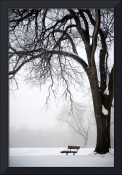Bare Tree And Park Bench In Winter, Assiniboine Pa