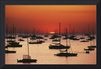 Silhouetted Sailboats In Darwin Harbor