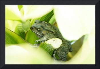 Green frog in between and surrounded by leaves.