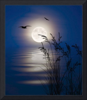 Moon Light Silhouettes