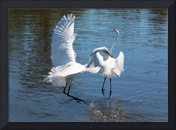 Great Egret Escape