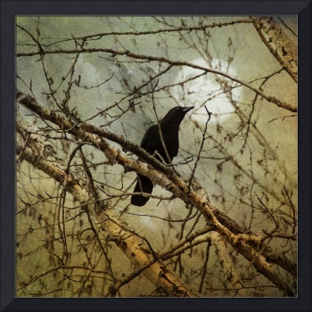 THE CROW AND THE FULL MOON