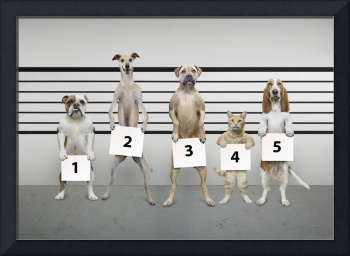 Dogs-Cats-Police-Line-Up