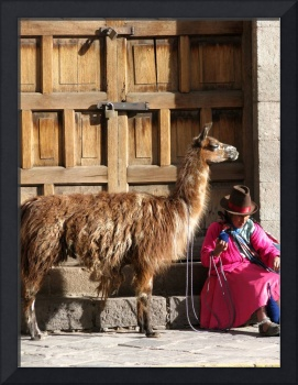 Traditional Peruvien woman knitting with a lama at