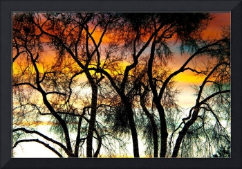 Colorful Silhouetted Trees 10